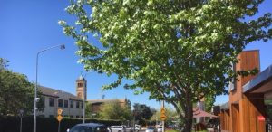 Recent ACT Government Tree Plantings in Inner South Canberra
